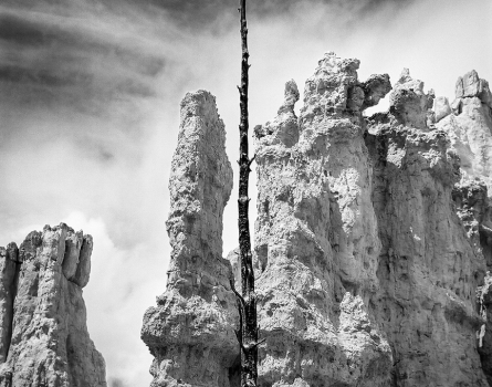 Weathered-Tree-and-Hoodoos-Bryce-Canyon,-UT